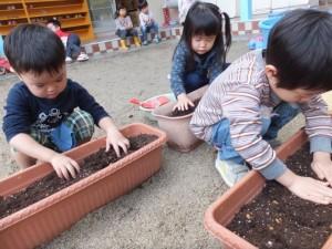 球根植え (4)