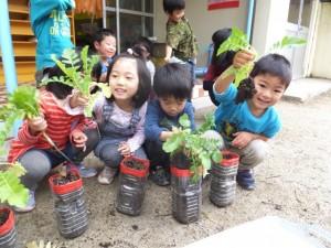 大根の収穫 (2)