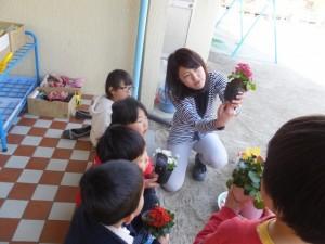 お花植え (11)