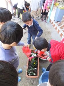 お花植え (14)