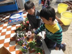 お花植え (3)