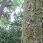ひかり組・たんぽぽ組 敬老はがき投函・お散歩(下鴨神社) 9月11日(水)