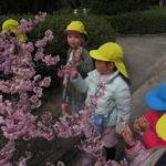 たんぽぽ組・ひよこ組・ことり組・ひかり組 さよなら遠足 3月8日(月)